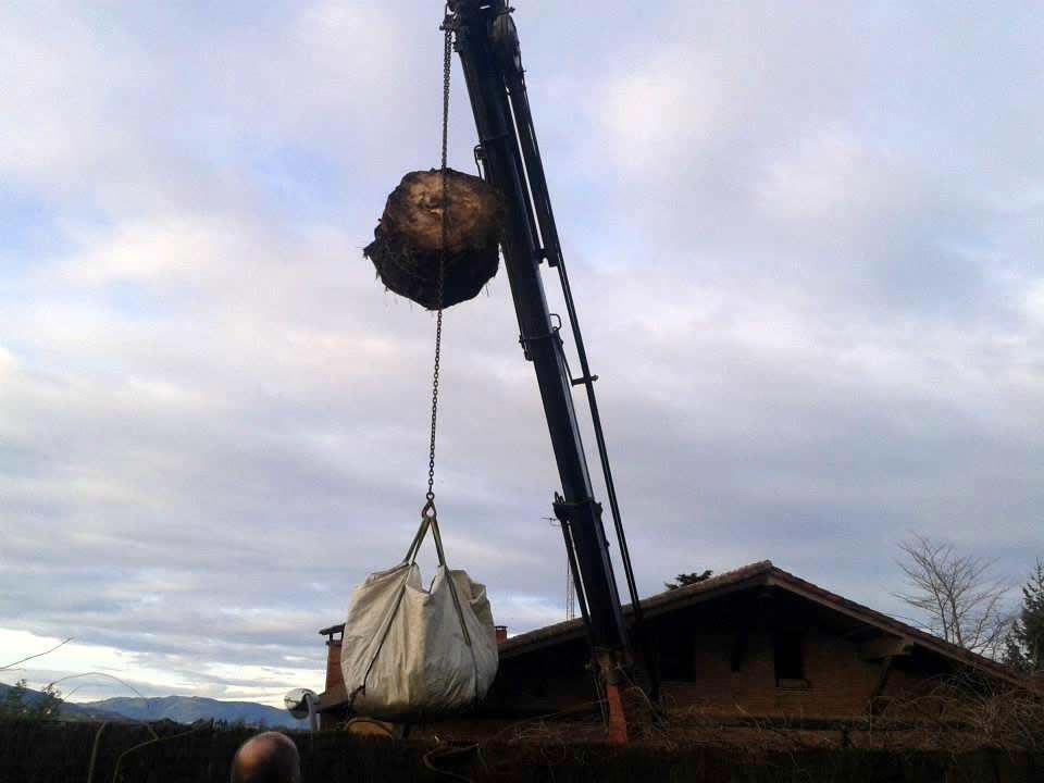 Maquinaria especializada para grandes podas