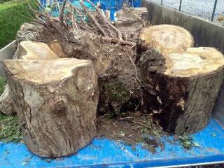 Tala, retirada y transporte de árboles