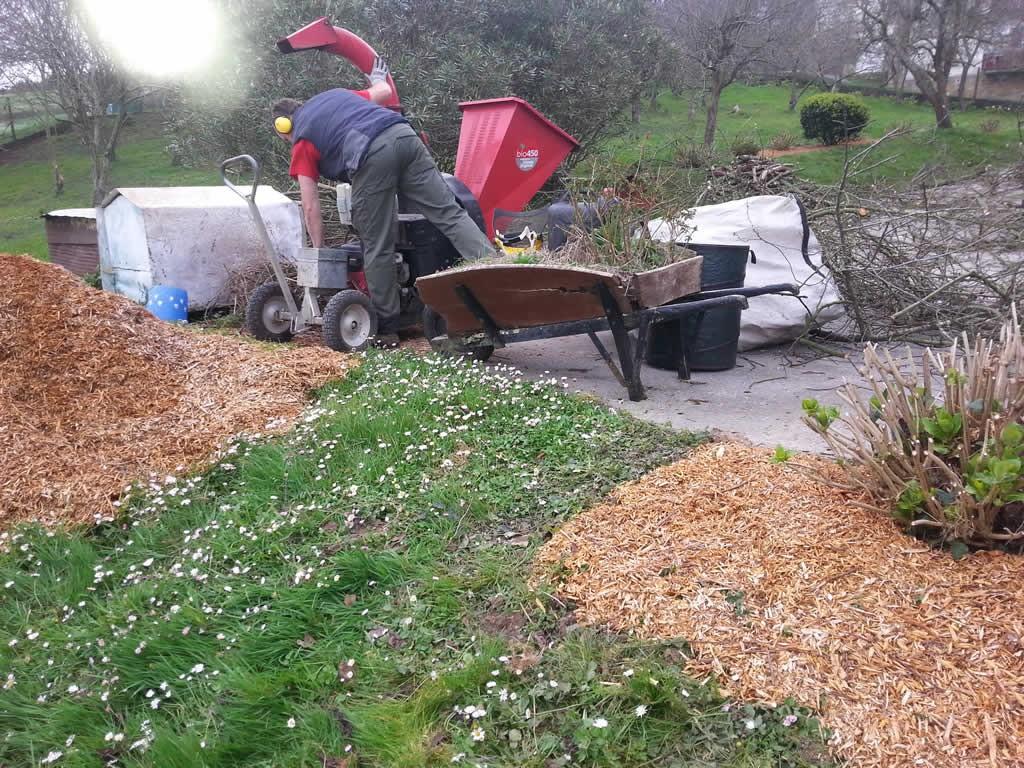 Limpieza terreno y podas en Igeldo