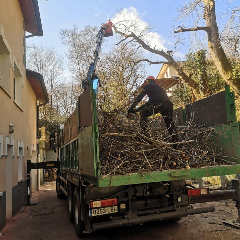 Kimaketa lanak Hondarribian / Trabajo de poda y tala de arboles en Hondarribia