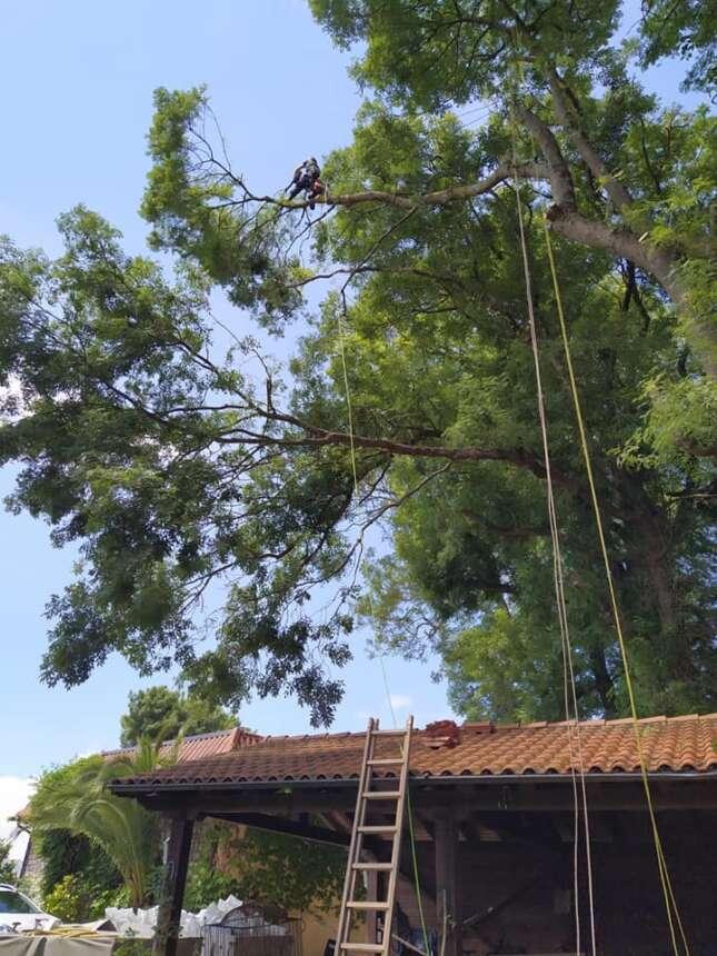 Arbol talatzea Aingeru zaindarian / Tala de arbol en Donostia.