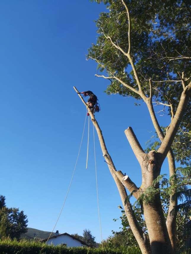 Kimaketak altueran eta talaketak / Poda en altura y tala de árboles en Zumaia