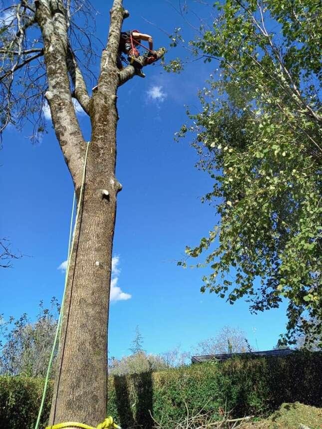 Kimaketak altueran /Poda en altura en Oiartzun