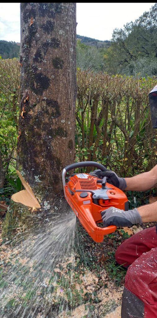 Tala eta kimaketa Errenterian / Poda y derribo de árboles en Don Bosco